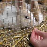 Futter Kaninchen