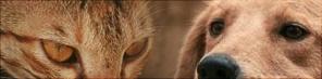 Teaser Tiere