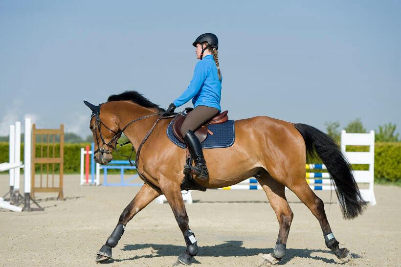 Pferd beim Ausreiten mit Sattel, Zaumzeug und Pferdegamaschen