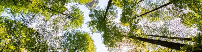 Das Nachhaltigkeitsdreieck