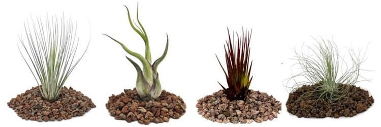 Terraristik: Pflanzen