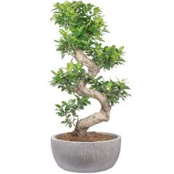 Link zu allen Zimmerpflanzen