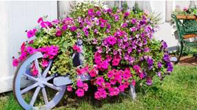 Farbenprächtige Blumen auf einem Fahrrad