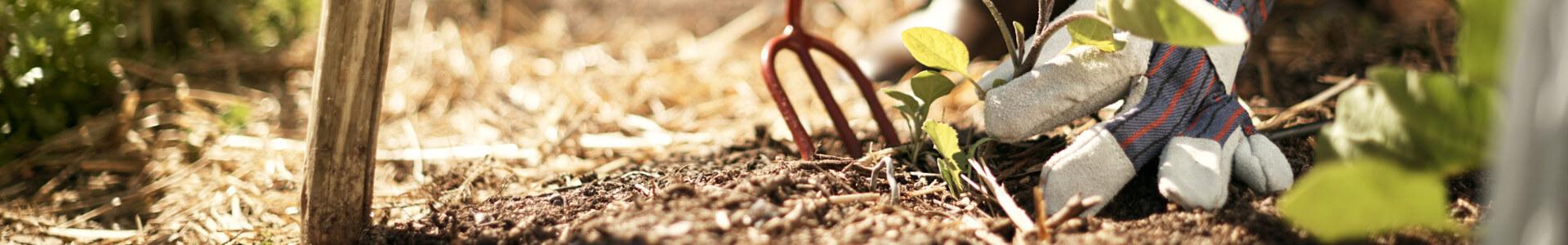 Beet und Gartenhandschuh