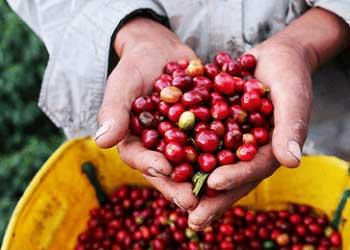Kaffeehersteller