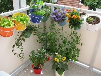 Balkonblumen in Blumenkästen und Blumentöpfen mit Rankhilfen