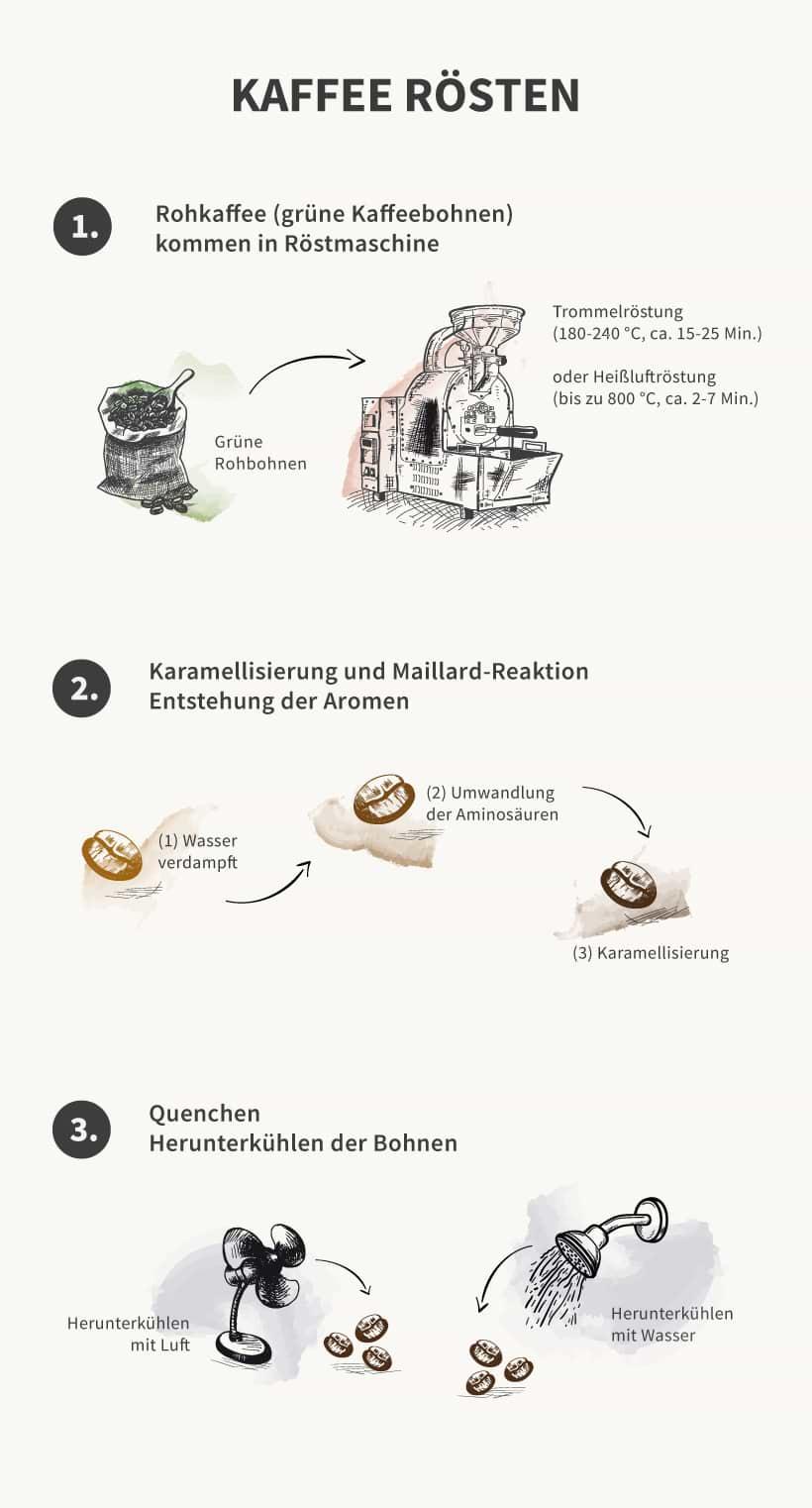 Infografik: Röstungsprozess von Kaffee