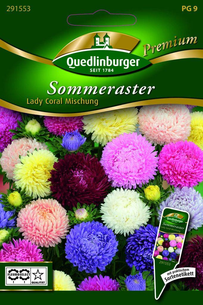 Quedlinburger Astern Paeonien Turm rosa