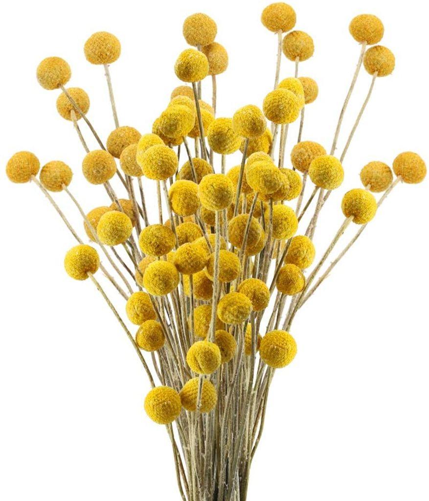 XHXSTORE 2pcs Getrocknete Blumen Craspedia Nat/ürliche Trockenblumen Billy Button B/älle Blumenstrau/ß f/ür Vase Hochzeit Hause Party Fotografie Blumenarrangement Dekoration Rot