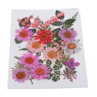 1 Packung Mixed Natural Presses Blätter Trockenblumen 13X18CM G gepresste Blumen