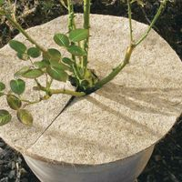 Siena Garden 641374 Kokos-Mulchscheibe Durchmesser:45cm