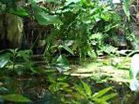 Pflanzenset für Regenwald Paludarium Terrarium