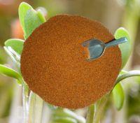 Kresse Gartenkresse Einfache 1kg Samen,  frische, reine Ware