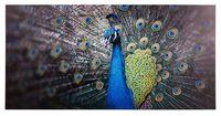 Grap Deko-Panel peafowl - 50 x 100cm
