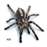 3D Auto Aufkleber Tiere Autoaufkleber Spider Lizard Scorpions Decor Auto-Styling Aufkleber Auto Motorrad Dekorationen