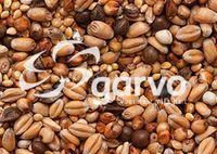 20kg Garvo 5426 Turteltaubenfutter / Diätfutter