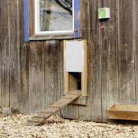 Kerbl Automatisches Hühnerstall Tür-Set 300 x 400 mm 70546