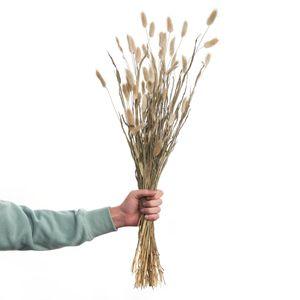 BUTLERS FLOWER MARKET Trockenblumen Lagurusgras Länge 70cm