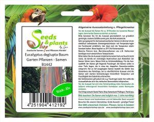 20x Eucalyptus deglupta Baum Garten Pflanzen - Samen B1442