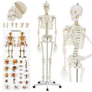Juskys Anatomie Skelett Modell mit Ständer, Poster und Haube Knochenmodell Menschlich Lebensgroß Beweglich