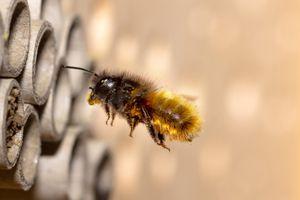 50x Bienen Niströhre Nisthilfe Insektenhotel für Wildbienen Hummeln 10 mm Durchmesser 12 cm Länge