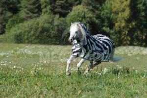 Bucas Fliegendecke Zebra mit Halsteil - 145 cm