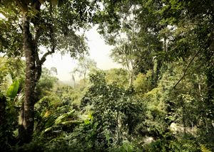 "Komar Vlies Fototapete ""Dschungel"", grün, 350 x 250 cm"