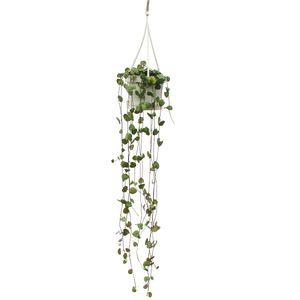 Zimmerpflanze zum Hängen - Ceropegia woodii - Leuchterblume - 10cm Ampel