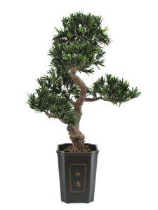 EUROPALMS Bonsai Podocarpus, Kunstpflanze, 80cm