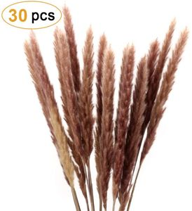 Pampasgras, Natürliche Pampasgras Getrocknet Pampas Gras Phragmites Trockenblumen
