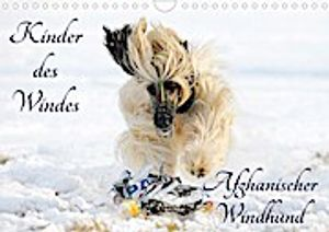 Kinder des Windes - Afghanischer Windhund (Wandkalender 2021 DIN A4 quer)