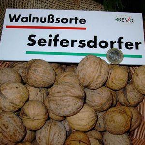 Seifersdorfer Runde - Walnussbaum XXL