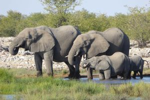 hansepuzzle 75903 Tierwelt - Elefanten, 2000 Teile in hochwertiger Kartonbox, Puzzle-Teile in wiederverschliessbarem Beutel.