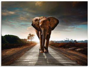 ARTland Glasbild Ein Elefant läuft auf der Straße Glasbild Größe: 80x60 cm