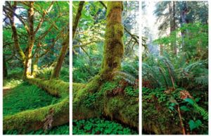 Wälder Poster Leinwandbild Auf Keilrahmen - Riesen-Wurzeln Im Regenwald, 3-Teilig (120 x 180 cm)
