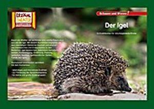 """Kamishibai: Der Igel: 10 Fotobildkarten für das Erzähltheater (""""""""Schauen und Wissen!"""""""" für das Kamishibai)"""