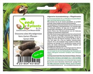 10x Dioscorea alata Wurzelgemüse Yams Garten Pflanzen - Samen ID94