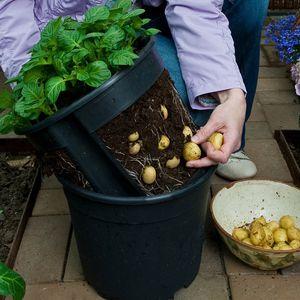 PotatoPot Kartoffel-Pflanztopf, 1 Topf inkl. Einsatz