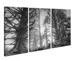 Leinwandbild 3 Tlg Dschungel Regenwald Wald Sonne Schwarz weiß Leinwand Bild Bilder canvas Holz fertig gerahmt 9V1036, 3 tlg BxH:90x60cm (3Stk  30x 60cm)