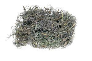 Curly Moos grau 50g | Curlymoos | Tillandsia Moos | Deko Moos | Bastelmoos | Dekomoos | Bastel Moos | Moos zum Basteln