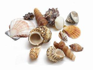Muschelmix Extra groß 1kg | Muscheln und Schnecken im mix | Deko Muscheln zum Basteln | Dekomuscheln zum Basteln & Dekorieren