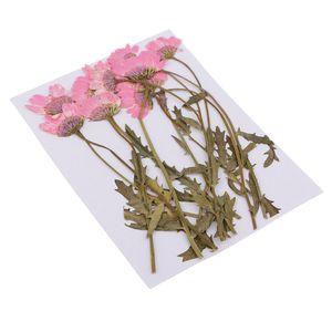 Packung mit 12 Zweige getrocknete Blumen Farbe Rosa