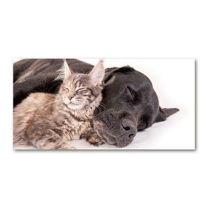 Tulup® Leinwandbild - 140x70 cm - Wandkunst - Drucke auf Leinwand - Leinwanddruck  - Tiere - Braun - Hund Katze