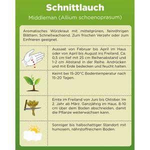 Schnittlauch Samen (Middleman) | Schnittlauchsamen | Saatgut für Schnittlauch-Pflanzen | Kräutersamen