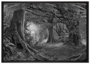 Dschungel im Regenwald Leinwandbild 100x70 cm im Bilderahmen / Wandbild  / Schattenfugenrahmen / Kein Poster
