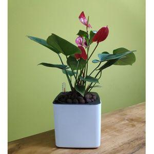 3xSelbstbewässerung Pflanzgefäß Blumentopf Mit Wasserstandsanzeige
