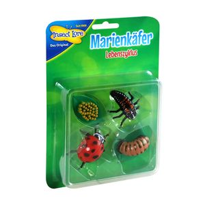Insect Lore - Lebenszyklus Marienkäfer aus Kunststoff