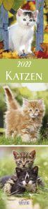 Katzen Langplaner 2022