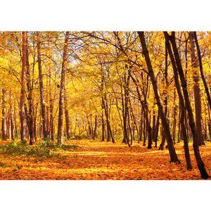 Fototapete Autumn Forest Wald Tapete Herbstblätter Wald Bäume Baum Forest Herbst orange   no. 84, Größe:400x280 cm, Material:Fototapete Vlies - PREMIUM PLUS