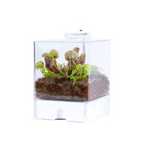 Pflanzenterrarium mit Beleuchtung jeweils   Fleischfressende Pflanzen - Selbst gemacht
